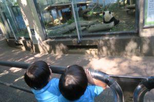 【2019年】上野動物園に2歳の双子連れで遊びに行ってきました | パンダレーン