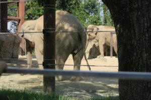 【2019年】上野動物園に2歳の双子連れで遊びに行ってきました | ゾウ