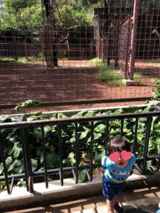 【2019年】上野動物園に2歳の双子連れで遊びに行ってきました | キリン