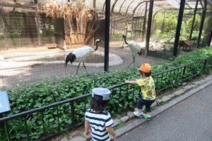 井の頭自然文化園に双子連れで行ってきました 分園 水生物園 鶴