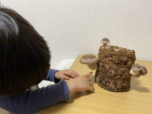 自宅の時間を楽しく!3歳児「しいたけの栽培」で食育デビュー