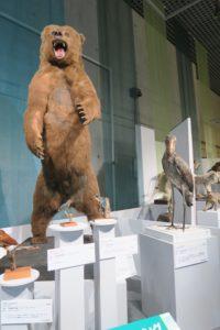 大地のハンター展 クマ
