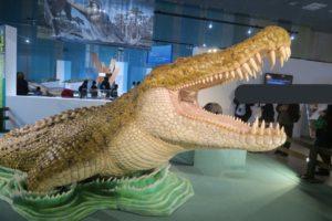 大地のハンター展の展示 巨大なワニ